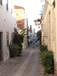 A man walking his dog. Where are we, you ask? Somewhere in Cascais- in the neighborhood outside of touristy Old Town.