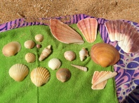 I collected these shells, but only took home three. Which would you have stashed away in your bag?