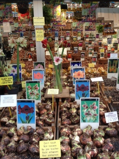 Bulbs at the flower market.