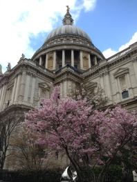 St. Pauls with sakura