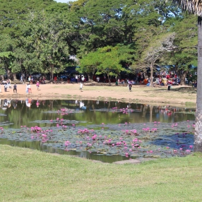 The lotus pond in front of Angkor Wat (reflection pool)
