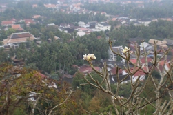 The frangipani is the country's flower