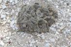 More caterpillars!