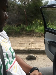 Corey spotted this little one on the drive out to lunch