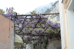 Wisteria abounds!