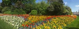 Full bloom in St James Park