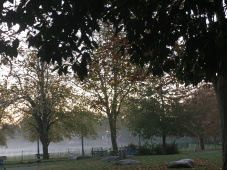 Misty before sunrise: Wray Crescent Open Space