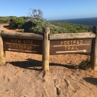 Take the right to the Voetpad Trail for a beautiful walk, and a small rock climb up and then down to the Cape of Good Hope sign.