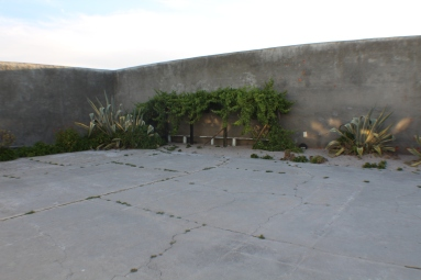 Mandela's garden patch amidst the concrete