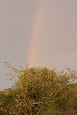 Rainbow over the hyena den. Couldn't quite capture the lightening on this night!