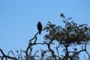Anonymous hawk 3