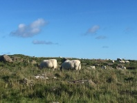 Sheep shop!